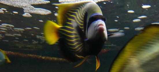 La grand aquariem 1